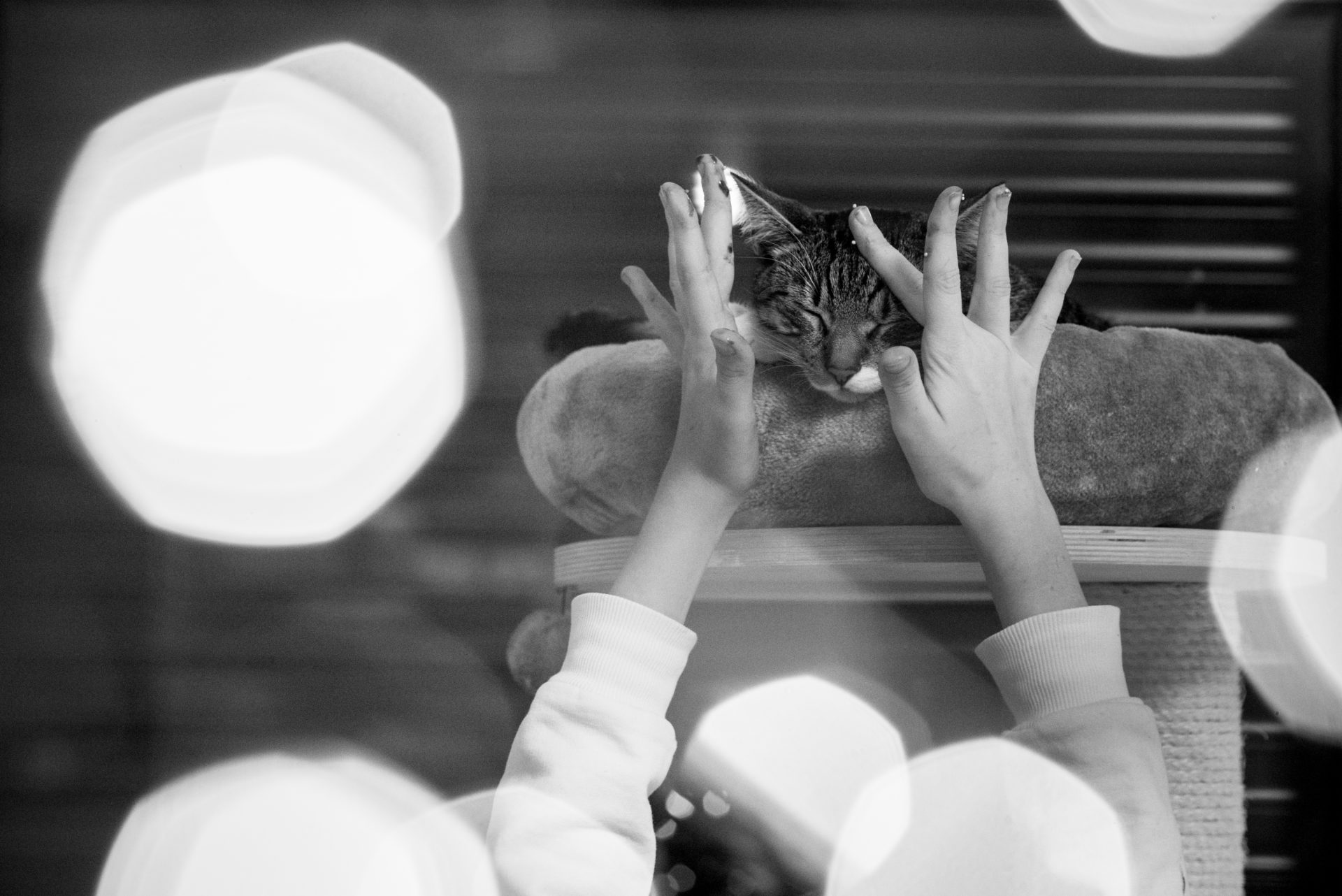 Domowe historie kota Stefana na górce